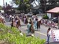 Starr-030705-0037-Cordyline fruticosa-July 4 Parade-Makawao-Maui (24008865594).jpg