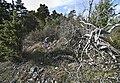 Stensättning Vaskinde 33 2.jpg