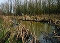 Still Water (It's Frozen^) - geograph.org.uk - 1099476.jpg