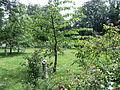 Storey's Garden 6740.JPG