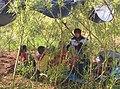 Story teller at Whistle Wood common.jpg