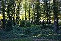 Strašnický hřbitov hroby.jpg
