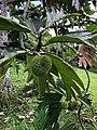 Strange Fruit (45808350124).jpg