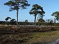 Strijbeekse Heide File98.jpg
