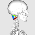 Suboccipital muscles03.png