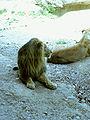 Suisse zoo (40).jpg