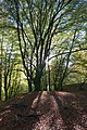 Sun Through The Trees In Bracklinn Woods - panoramio.jpg