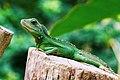 Sunbathing Reptile (Unsplash).jpg