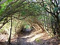 Sussex Border Path, Chase Wood - geograph.org.uk - 303108.jpg