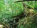 Svente Parish, LV-5473, Latvia - panoramio - alinco fan (5).jpg