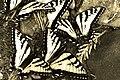 Swarm (736070541).jpg