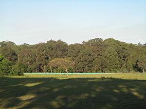 Sydney Turpentine-Ironbark Forest - Image: Sydney Turpentine Ironbark Forest, Yaralla Estate, Concord West, NSW, 2