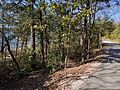Table Rock Lake Shoreline Trail.jpg