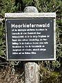 Tafel Hinterzartener Moor 1130118 Moorkiefernwald.jpg