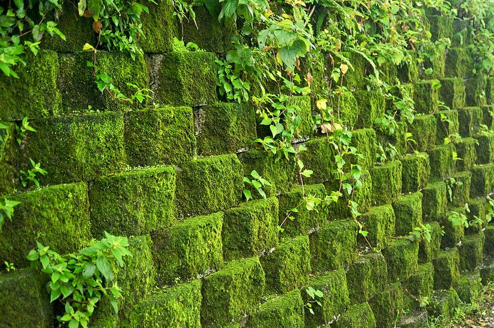 Taiwan 2009 JinGuaShi Historic Gold Mine Moss Covered Retaining Wall FRD 8940