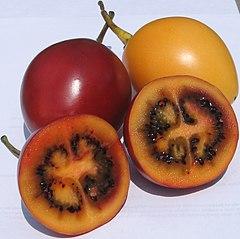 Tamarilhos amarelo e vermelho, o fruto do Solanum betaceum