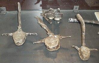 Telmatosaurus - Telmatosaurus transsylvanicus vertebrae