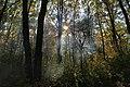 The Autumn dreams - panoramio.jpg