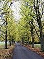 The Drive - Parnham - geograph.org.uk - 1037363.jpg