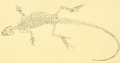 The Osteology of the Reptiles-281 ert ert.png