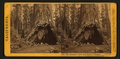 The Pioneer's Cabin and Pluto's Chimney, Big Tree Grove, Calaveras County, by Lawrence & Houseworth.png
