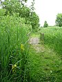 The Ted Ellis Nature Reserve -path along Home Dyke - geograph.org.uk - 1341530.jpg