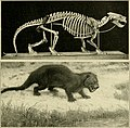 The age of mammals in Europe, Asia and North America (1910) (17758692339).jpg