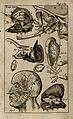 The anatomy of the ear. Engraving, 1686. Wellcome V0007782ER.jpg