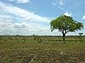 The bush (393887386).jpg