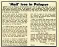 The selous tree at Palapye (The mail tree in the past) Botswana History.jpg