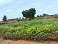The view of the village in ondo state.jpg