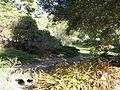 Tilden botanical garden 4.JPG