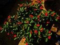 Tiny red flower.jpg