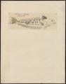 Trachinus draco - 1700-1880 - Print - Iconographia Zoologica - Special Collections University of Amsterdam - UBA01 IZ13200041.tif