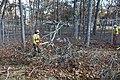Tree work at Long Island National Wildlife Refuge Complex Headquarters (NY) (8154103545).jpg