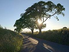 Trees near Week - geograph.org.uk - 847673.jpg