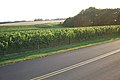 US-NY - Cutchogue - Vineyard (4887137055).jpg