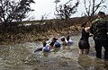 US Navy 050928-C-9767K-244 Volunteers with the Texas Marine Mammal Stranding Network catch a 7-foot, 400-pound dolphin that was stranded in a ditch near South Cameron High School after Hurricane Rita.jpg