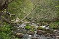 Umia River by Caldas de Reis, Galicia, Spain-6.jpg