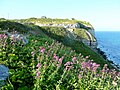 Valerian on the clifftop - geograph.org.uk - 1312359.jpg