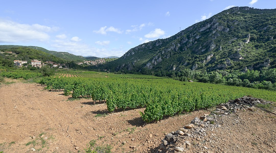 Vineyards and the village of Vieussan in the Haut-Languedoc Regional Natural Park. Vieussan, Hérault, France.