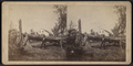View of a downed tree, by Worden, N. R. (Nicholas R.).png