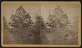 View of a road with horse-carts and downed trees, from Robert N. Dennis collection of stereoscopic views.png