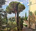 Villa Barberini Garden 20141006.jpg