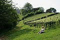 Vineyard and Sharpham House - geograph.org.uk - 336834.jpg
