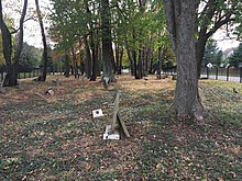 Vunk - Quick Burial Ground 9815.jpg
