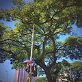 Waikiki - panoramio (6).jpg