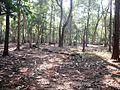 Walayar Deer Park - panoramio (7).jpg