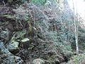 Wandern im November in Todtmoos - panoramio (27).jpg