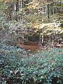 Warndt - panoramio.jpg